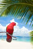 parrot on a beach