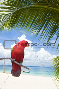parrot on a beach