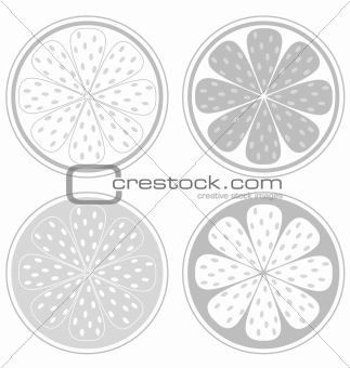 Citrus fruit slices isolated on white background (lemon, lime, orange, grapefruit)