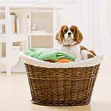 Dog in Laundry Basket