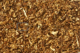 tobacco leaves background
