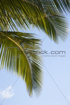Close up of palm frond against blue sky.