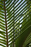 Close up of palm frond against blue sky in Maui, Hawaii, USA.