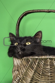 Black fluffy cat in basket.