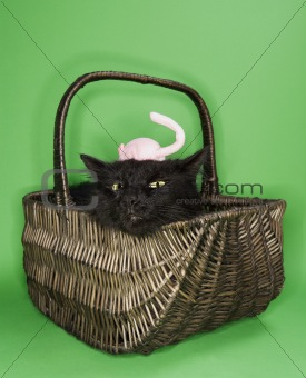 Black fluffy cat in basket with toy mouse on head.