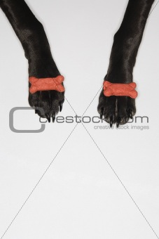 Black dog balancing treats on paws.