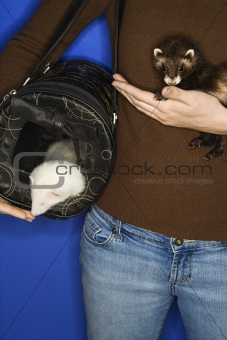 Pet ferrets held by Caucasian woman.