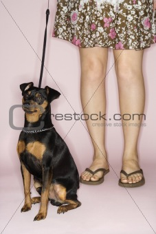 Caucasian female legs with dog on leash.
