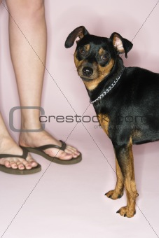 Caucasian female legs with dog.