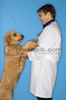 Caucasian male veterinarian with Goldendoodle dog.