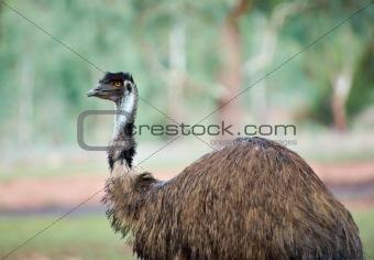 old emu