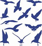 Birds, seagulls in blue silhouettes