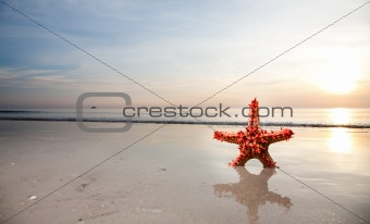 Starfish on the beachfront