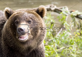 Smile of a bear