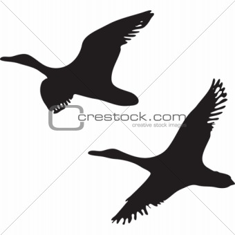 flying ducks - vector