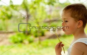 Thoughtful Dandelion