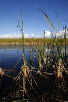 The Florida sawgrass marshes