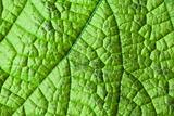 Green leaf structure