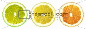 Citrus Trafficlight on White Background