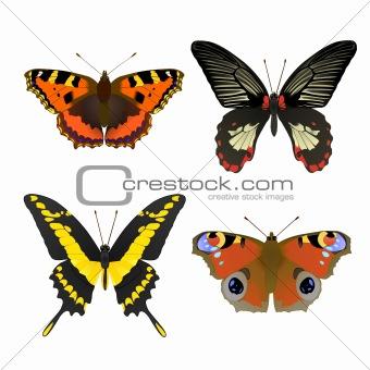 4 butterfly set