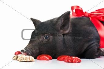 A Pig's life