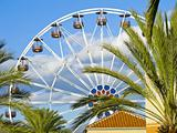 A Ferris Wheel, blue sky and palm trees.