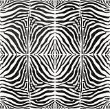 Vector seamless background skin zebra