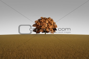 Alone tree in autumn