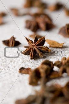 Aromatic star-aniseed