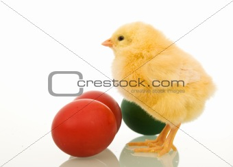 Little easter chicken with dyed eggs