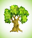 green tree oak as ecology symbol