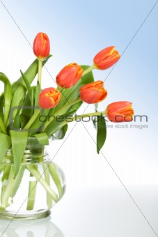Beautiful tulips in glass vase