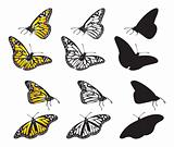 set of butterflies (vector)