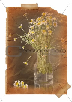 Camomile.  Page with vintage effect