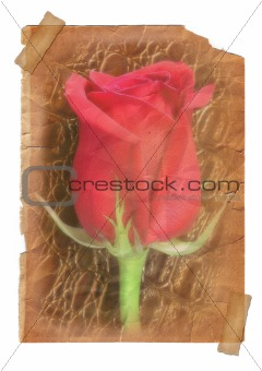 Page with Rose flower - vintage effect