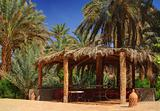 arbor among palm trees in Morocco