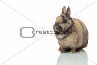 Little cute Easter bunny sitting alone on white background.