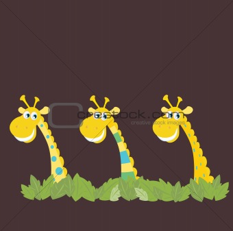 Three african safari giraffes