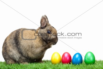 Easter bunny sitting in meadow with colorful Easter eggs