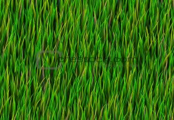 Green Grass Patch Background