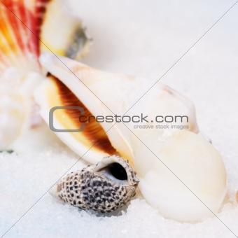 Small seashell