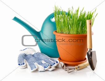green grass in the pot with shovel tool and gloves