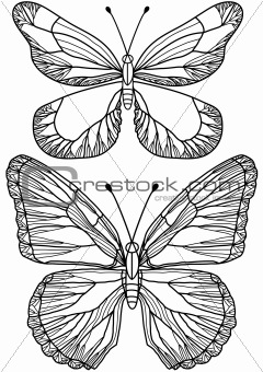 beautiful butterflies, vector