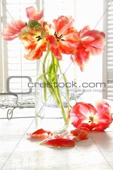 Beautiful tulips in old milk bottle