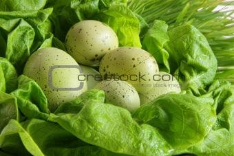 Green easter eggs in lettuce leaves