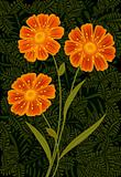 Three orange flowers