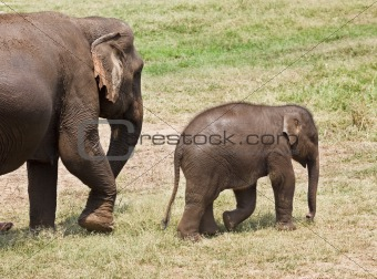 Baby and mother elephant.