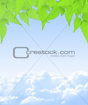 Green leaves and white clouds