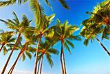 Palm, sky and ocean