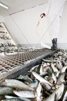 Fish factory.